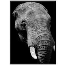 PAPERTOWN - POSTER ELEFANT SORT/HVIT