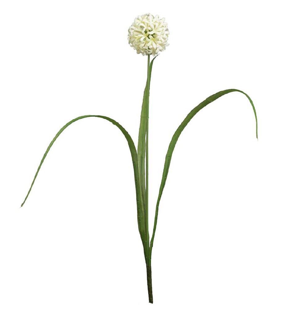 MR PLANT - ALLIUM 40 CM