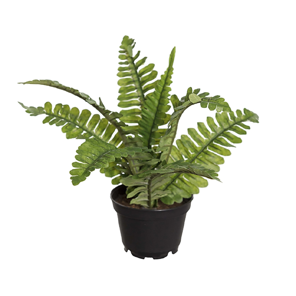 MR PLANT - FERN Grønn 16 Cm