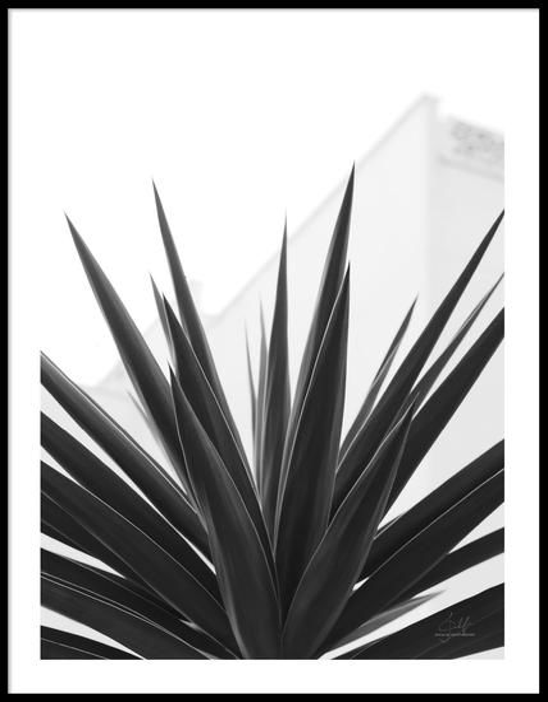 PAPERTOWN - POSTER PLANT TEXTURE SPAIN