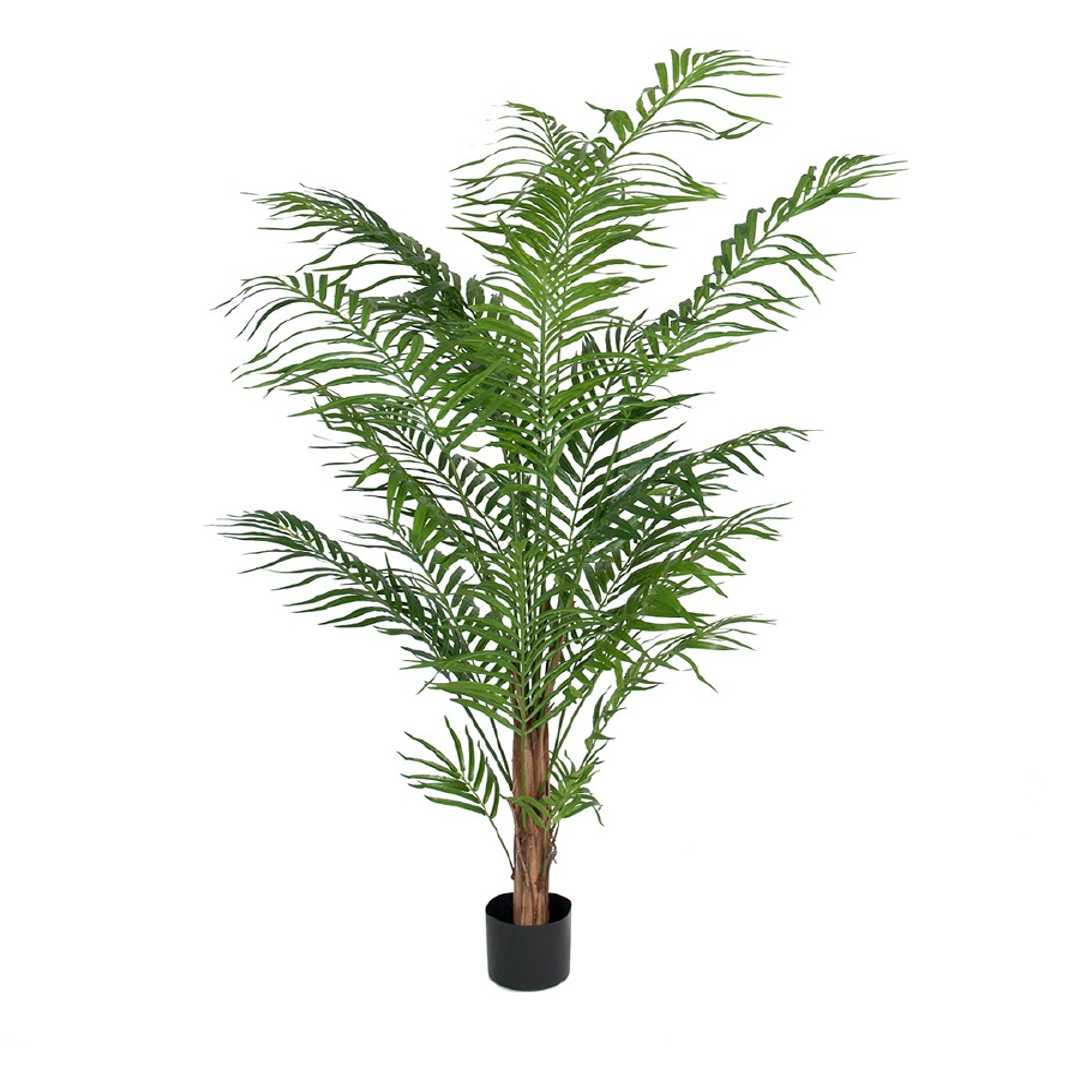 MR PLANT - ARECA PALME 180