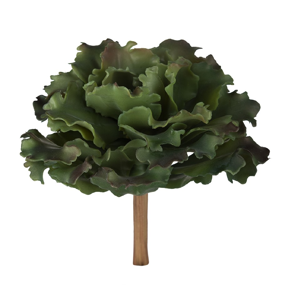 MR PLANT - SUCCULENT