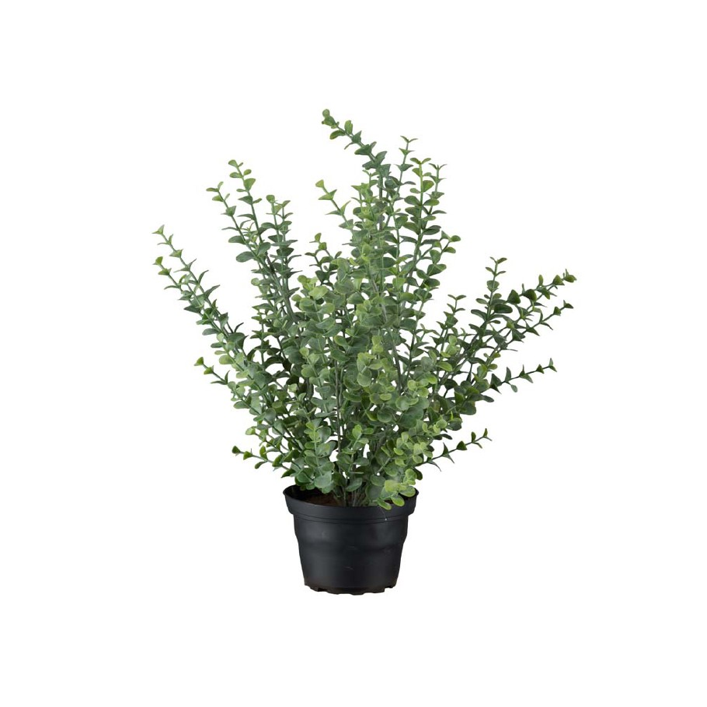 MR PLANT - EUKALYPTUS Grønn 40 Cm