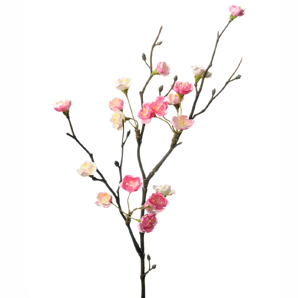 Mr Plant - Blomkvist Rosa