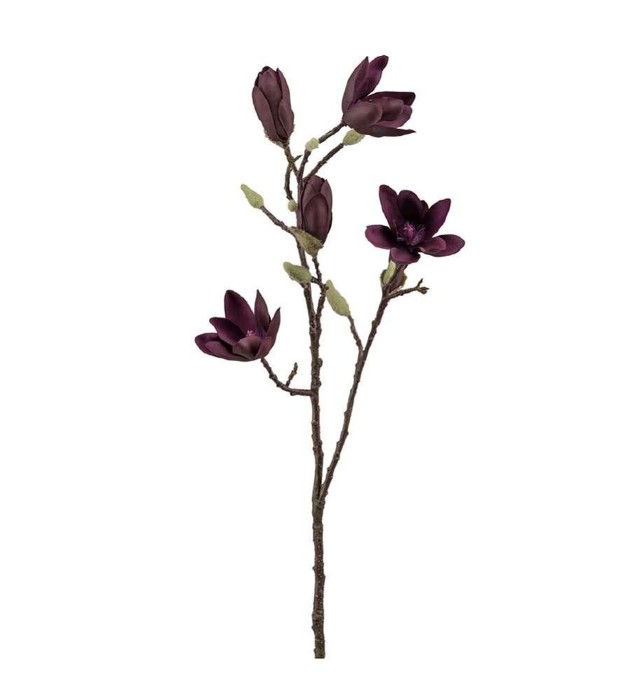 Mr Plant Phalaenopsis