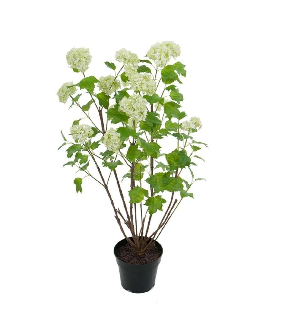 Mr Plant - Grankvist med kongler